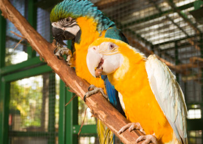 Macaw Parrots at Ashmore Palms