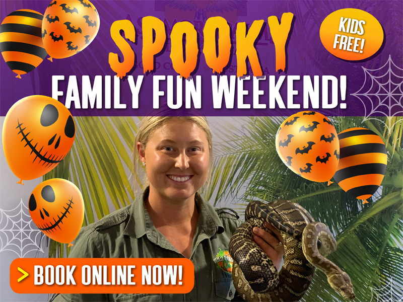 Spooky Family Fun Weekend - Book Now
